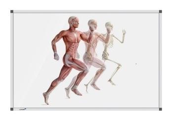 Legamaster 7-101254 Premium Board Human Anatomy - Running - 90 x 120 cm